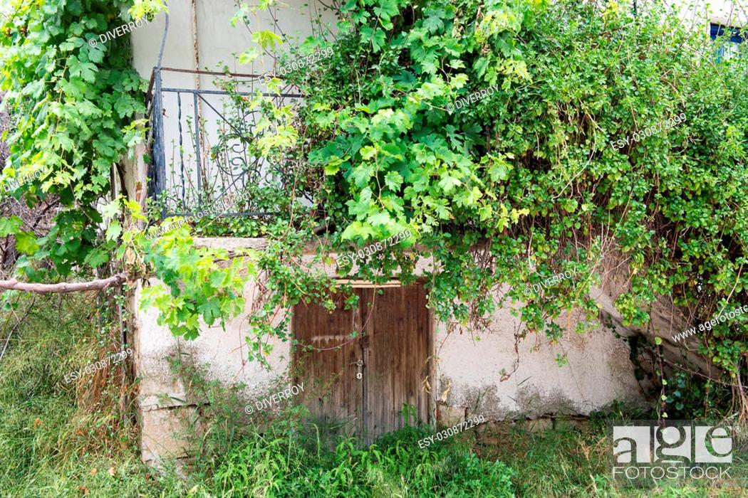 Stock Photo: Old balcony being over run by Vines.