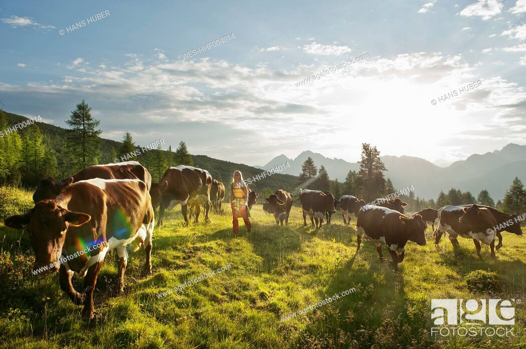 Imagen: Austria, Salzburg County, Young woman walking in alpine meadow with cows.