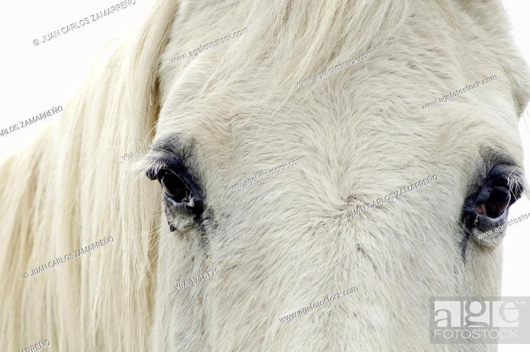 White Horse Eyes Segoyuela De Los Cornejos Tejeda Y Segoyuela Salamanca Castilla Y Leon Spain Stock Photo Picture And Rights Managed Image Pic Y9a 1715175 Agefotostock