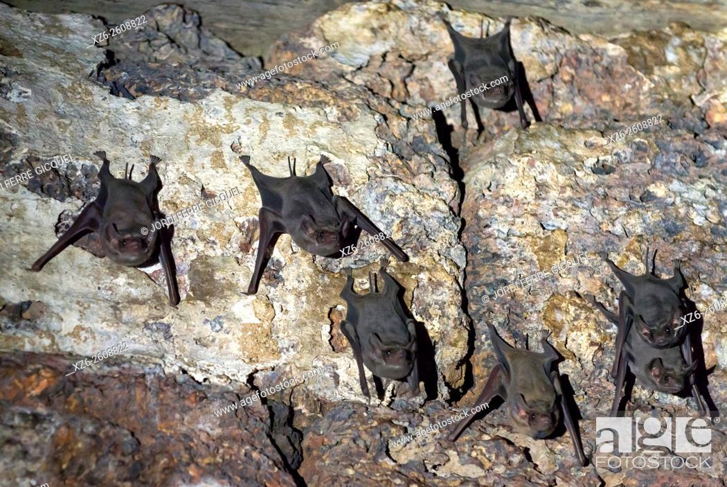 Stock Photo: Bats on Prang Sam Yot temple, Lopburi, Thailand, Asia.