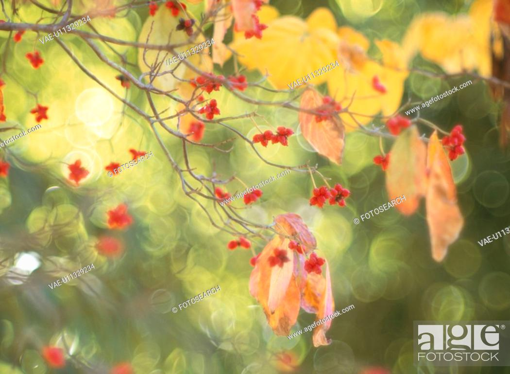 Stock Photo: Yellow Leaves.
