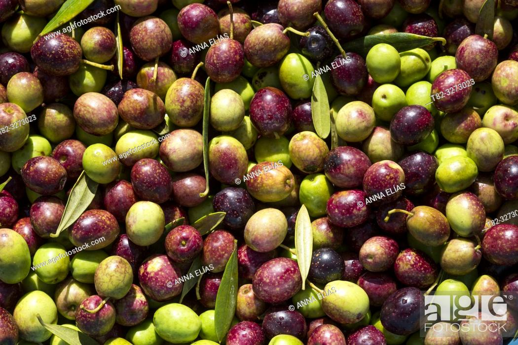 Stock Photo: Mosaic of table olives, Seville, Andalusia, Spain.