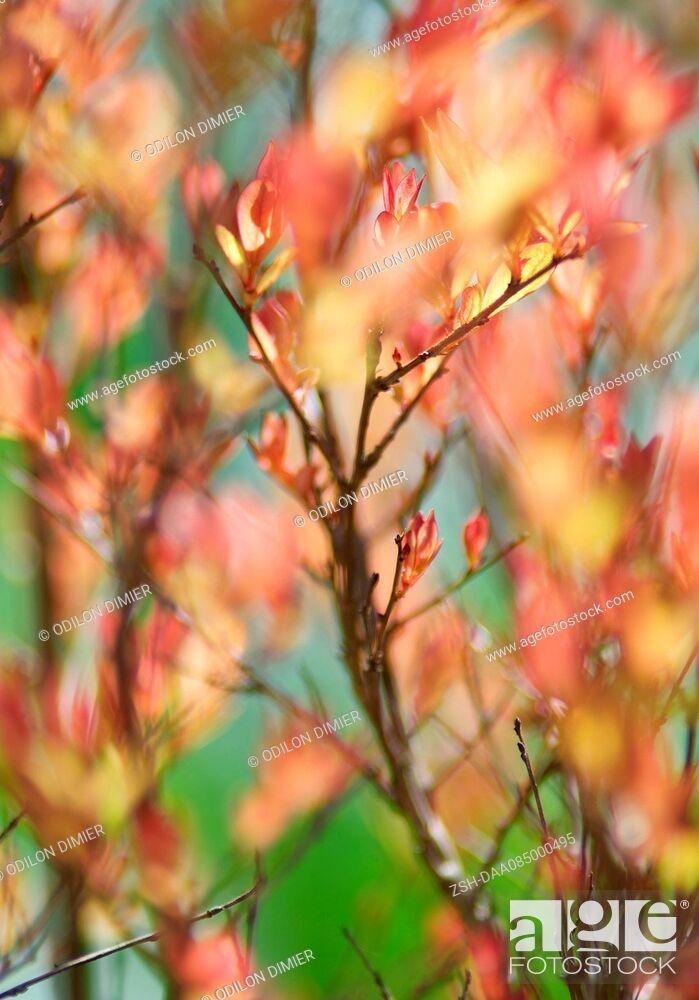 Stock Photo: Spring foliage, full frame.