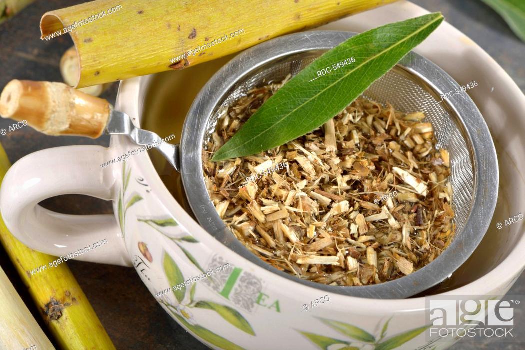 Stock Photo: Willow bark tea / (Salix alba).