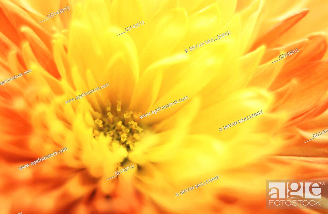 Stock Photo: Flower close-up.