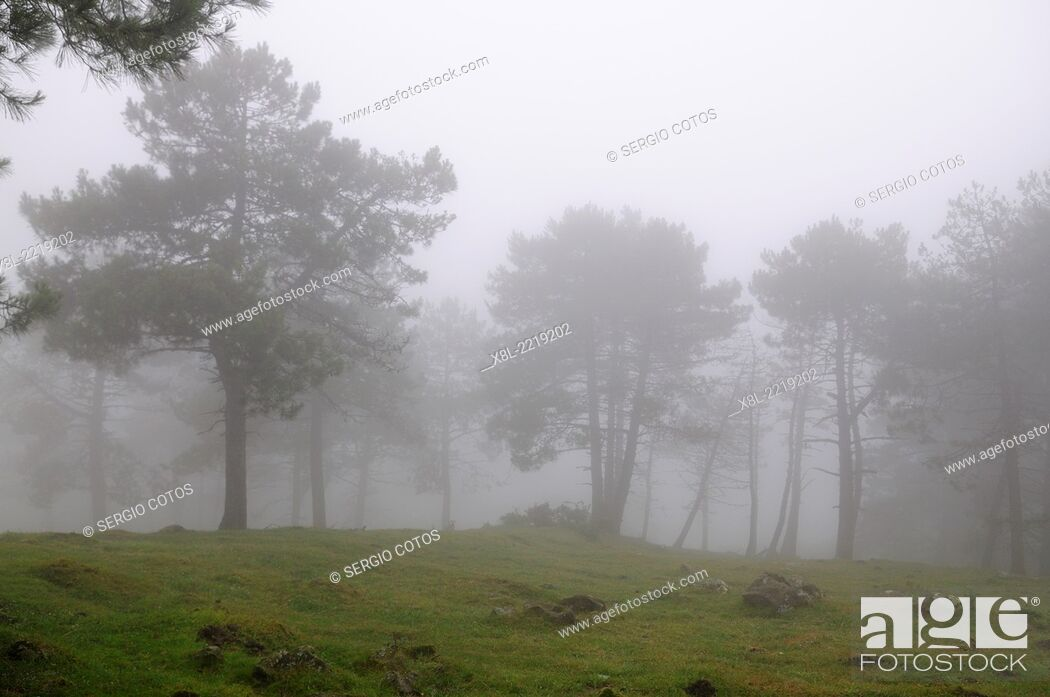 Stock Photo: Foggy landscape, Basque Country, Spain.