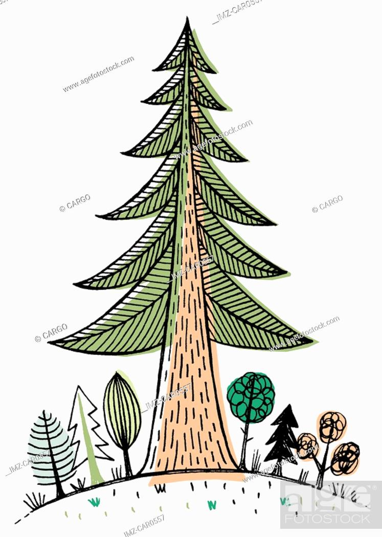 Stock Photo: A large redwood tree towering over smaller trees.