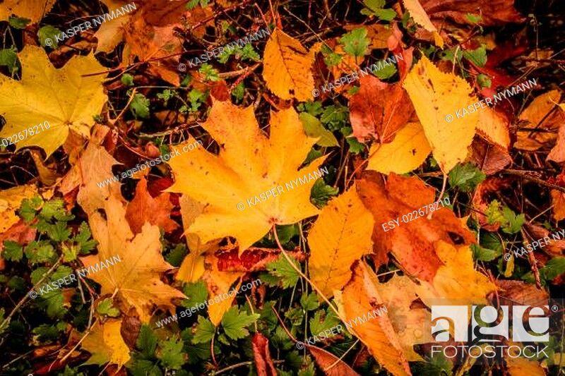 Photo de stock: Autumn leaf.
