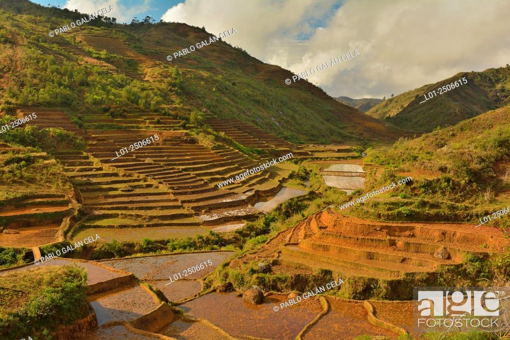 Imagen: Terraced fields, Zafimaniry ethnic group territory, South Madagascar.