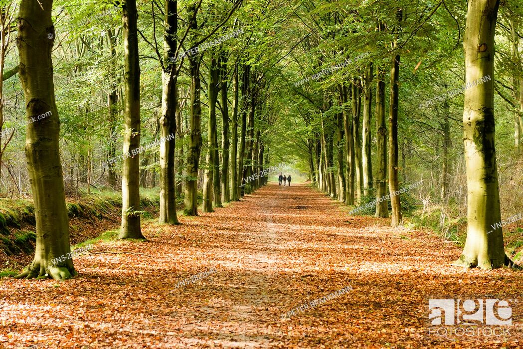 Stock Photo: Wouw - People walking in the autumn forest.