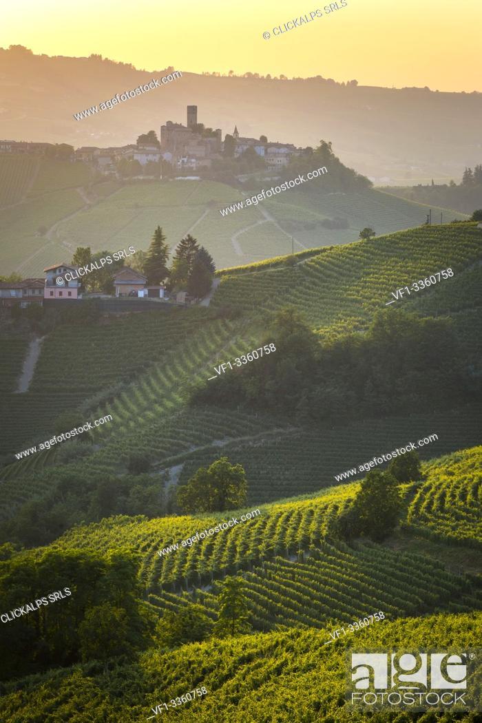 Stock Photo: Serralunga d'Alba, Barolo wine region, vineyards. Langhe, Piedmont, Italy.
