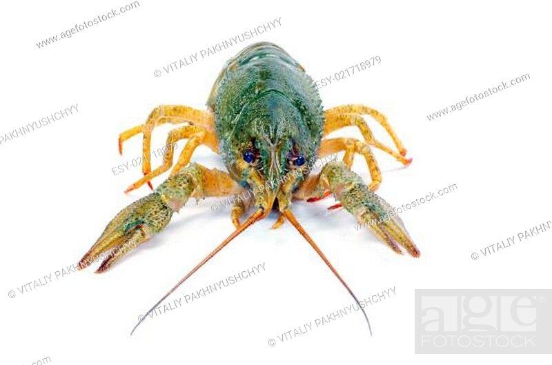 Stock Photo: crawfish.