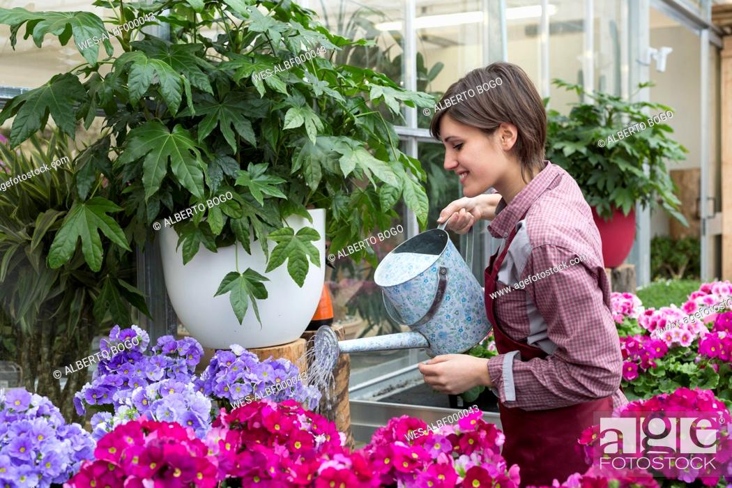 Stock Photo: Young female gardener working in greenhouse, watering flowers.