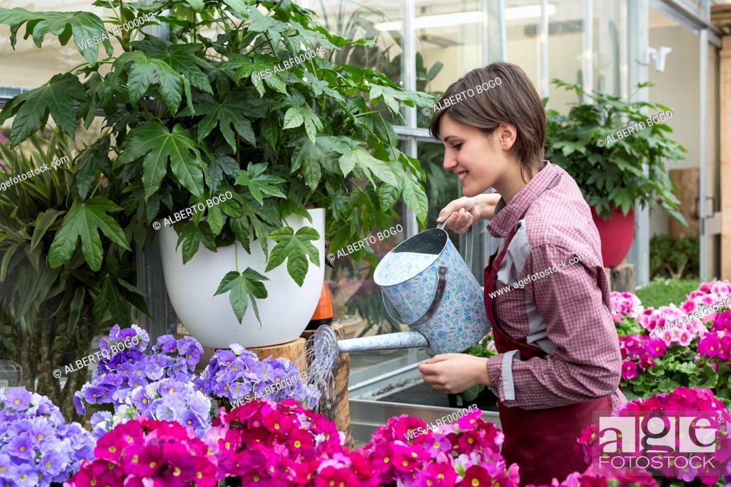Imagen: Young female gardener working in greenhouse, watering flowers.
