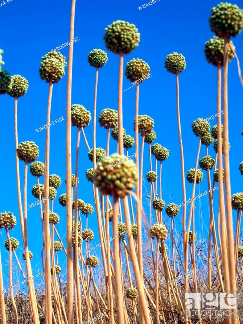 Stock Photo: Grass. Minorca, Balearic Islands, Spain.