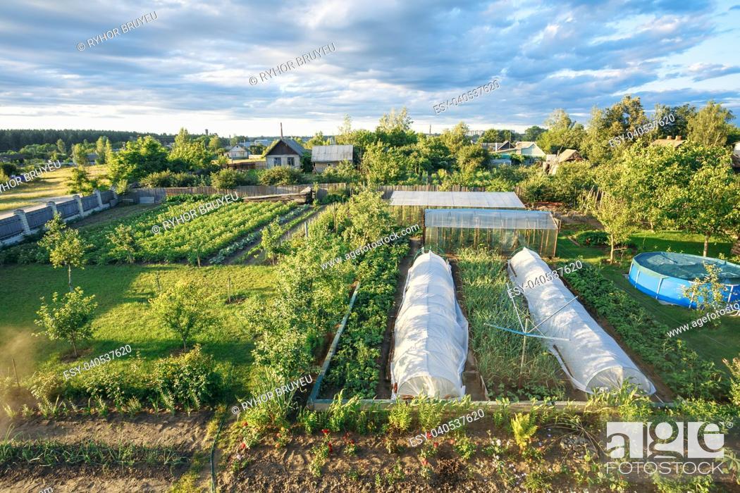 Stock Photo: Vegetables Growing In Raised Beds In Vegetable Garden. Summer Season.