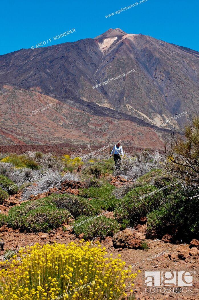 Stock Photo: Teide high plateau, Tenerife, Spain, Canary Islands, Europe.