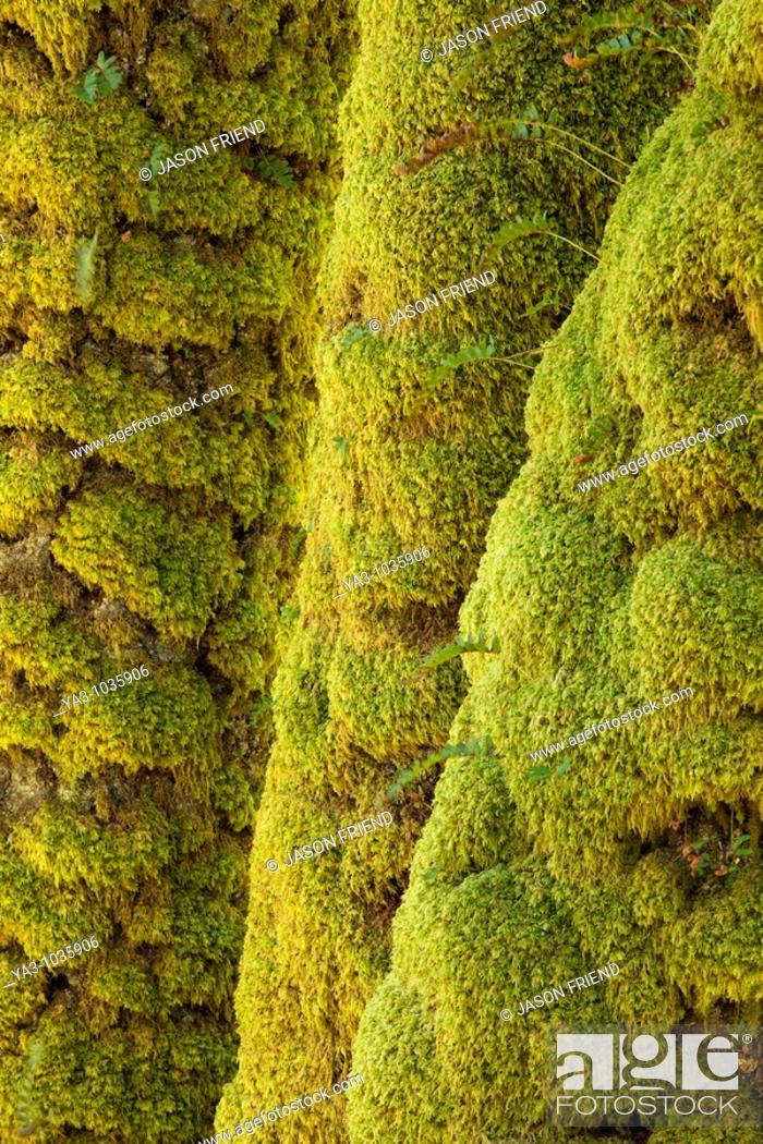 Stock Photo: Scotland, Scottish Highlands, Eas Chia-aig waterfall  Moss covered tree upstream of the Eas Chia-aig waterfall.