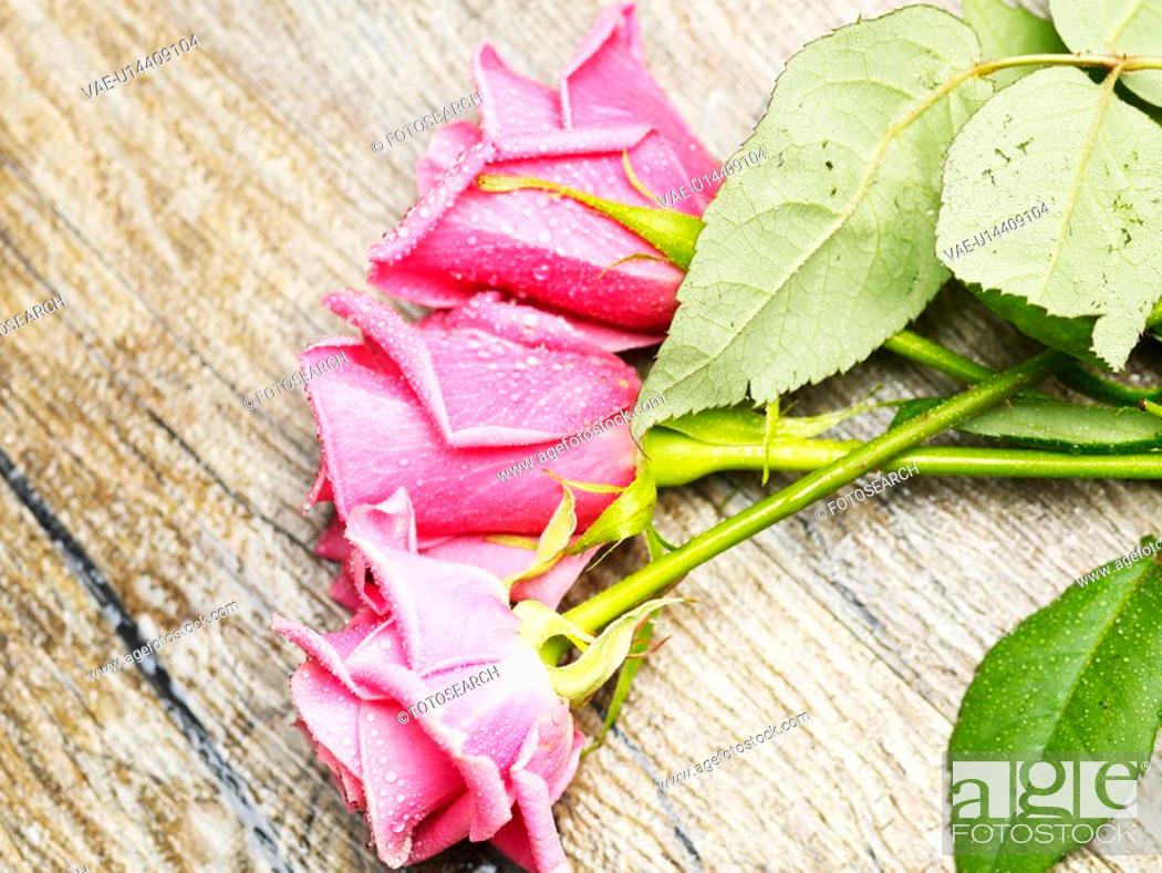 Stock Photo: floor, spring, waterdrop, dewdrop, rose, fancy, season.