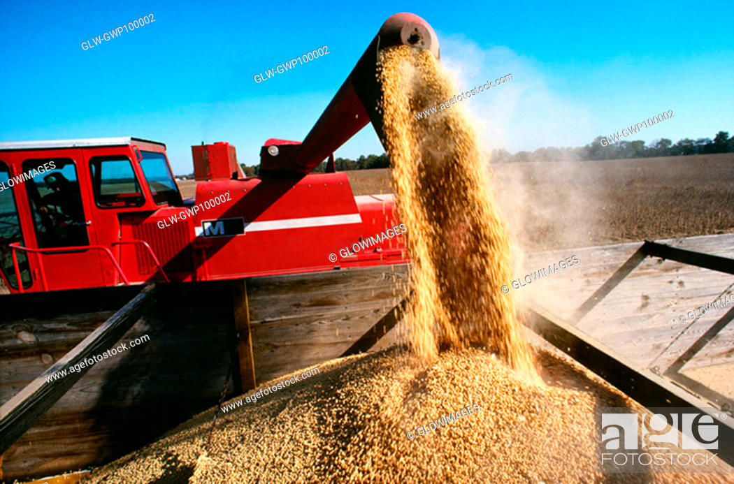 Stock Photo: Close-up of a combine loading soy beans into the truck, Midwest, USA.