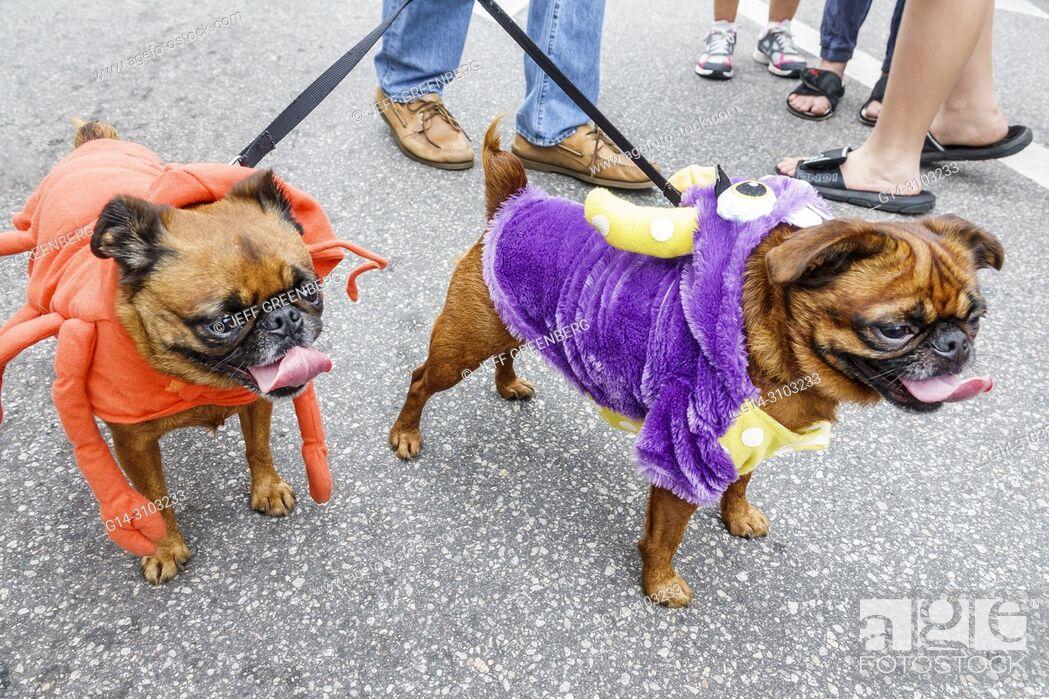 Florida, Ocala, Arts Festival, annual small town community event