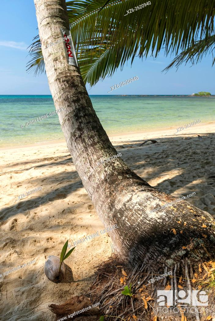 Stock Photo: A coconut sprouting on the beach, Koh Kood island, Ko Kut district in Trat Province, Thailand, Asia.