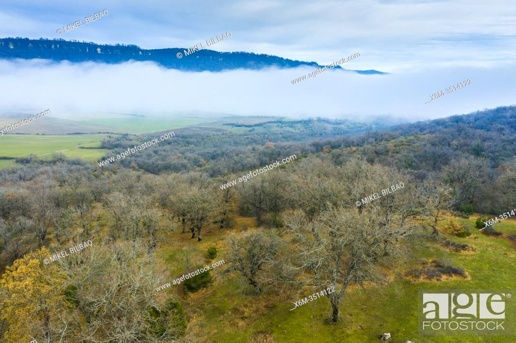 Stock Photo: Deciduous forest and fog. Aerial view. Aranarache area. Navarre, Spain, Europe.