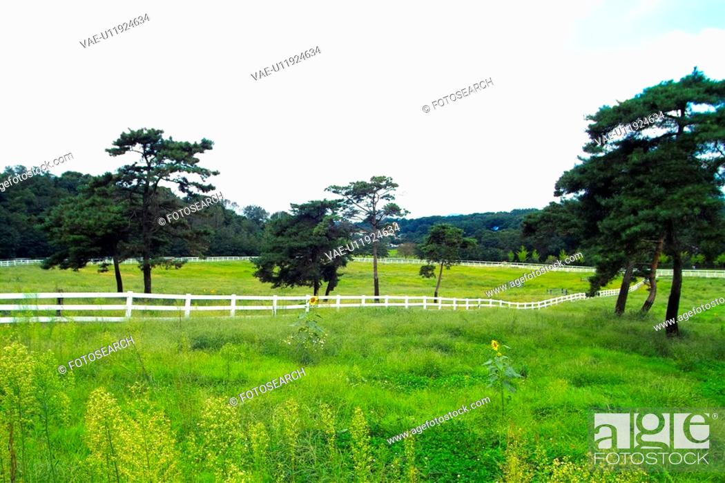 Stock Photo: field, landscape, scenery, ranch, sky.
