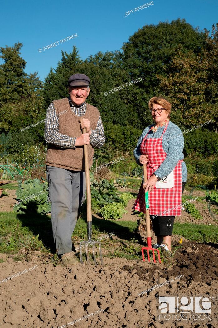 Stock Photo: ELDERLY COUPLE IN THE ALLOTMENT GARDEN, TOWN OF VERNEUIL-SUR-AVRE (27), FRANCE.