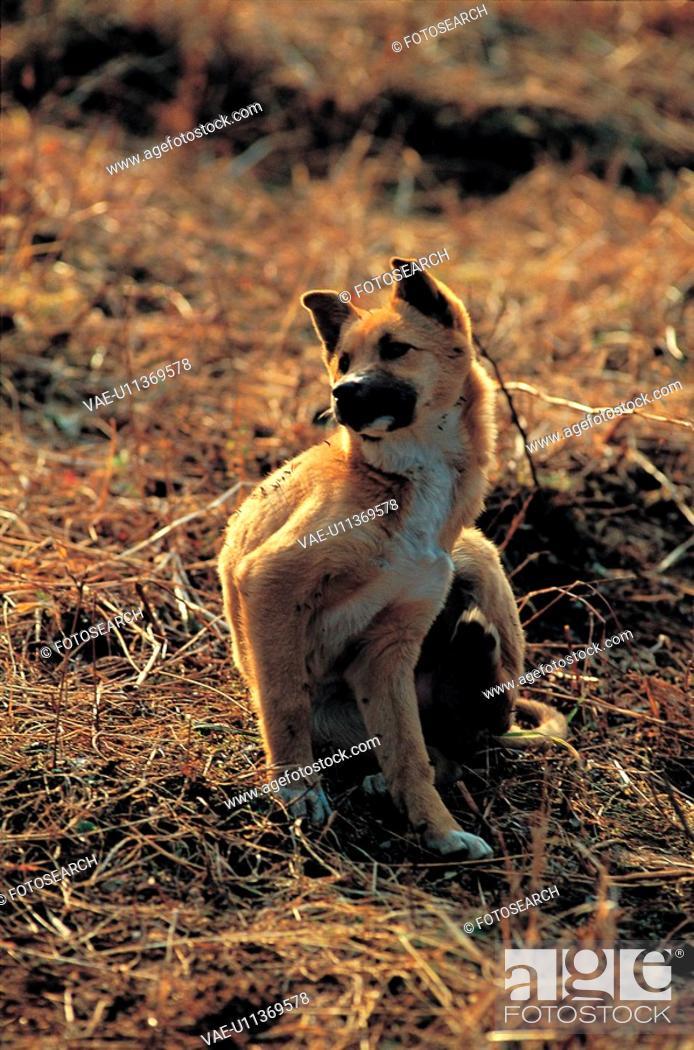 Stock Photo: canines, pup, domestic, animal, pet, scene, dog.