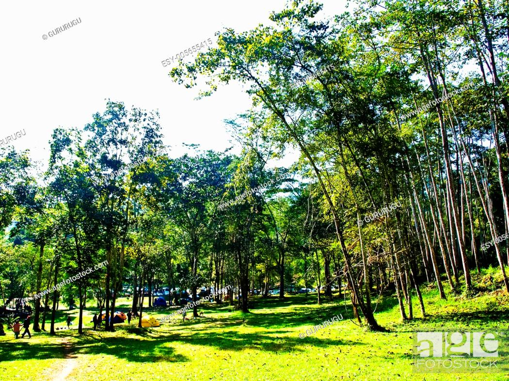 Stock Photo: Camping field in the forest of Huay Nam Dung Natonal Park in Chiang Mai, Thailand.