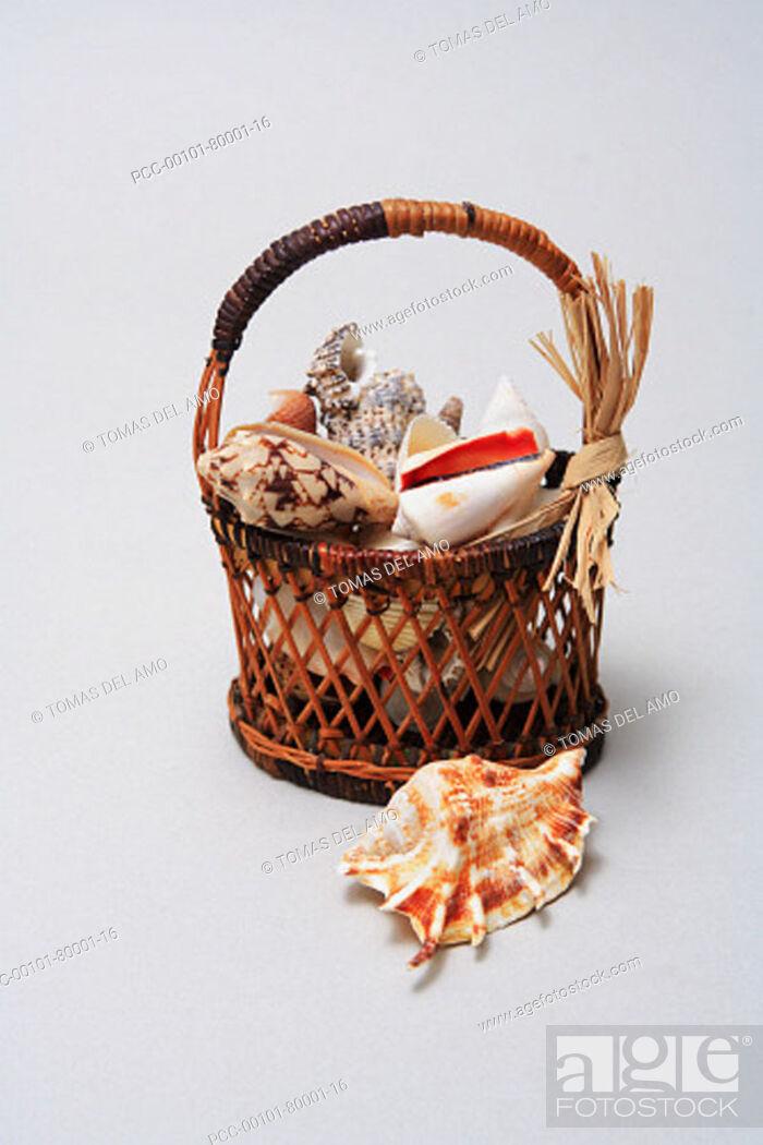 Stock Photo: Studio shot of a basket of shells.