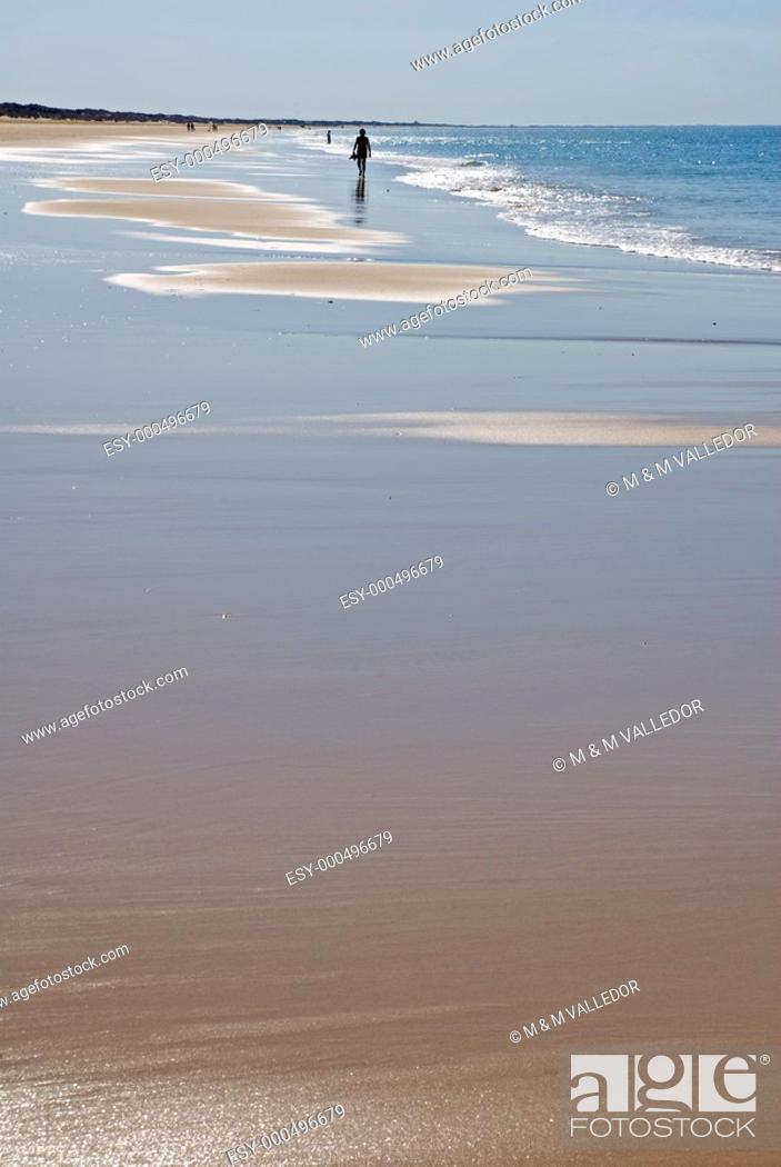 Stock Photo: Beach, Doñana National Park  Huelva province, Andalucia, Spain.