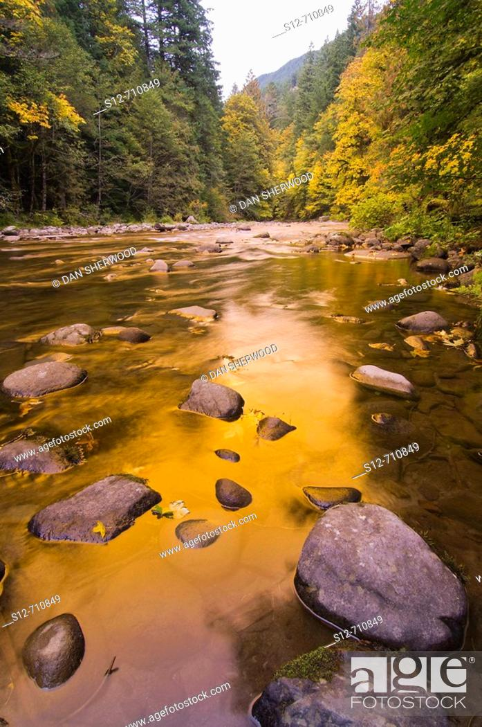 Stock Photo: Salmon River in Autumn - Mt  Hood National Forest, Oregon.