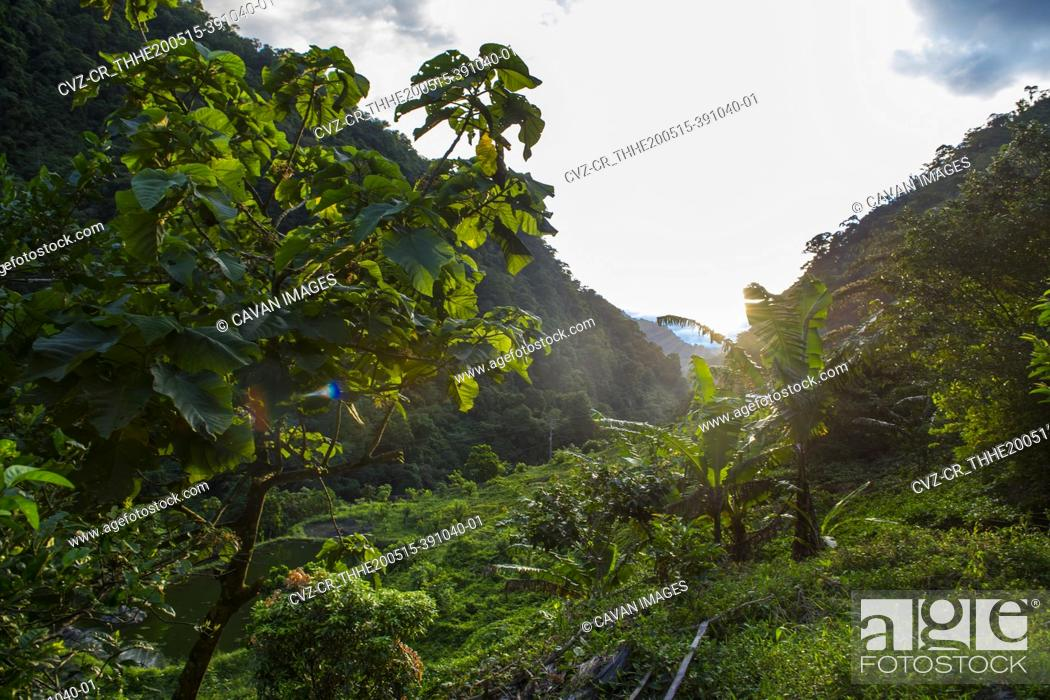 Stock Photo: lush vegetation in a valley in the Columbian jungle.