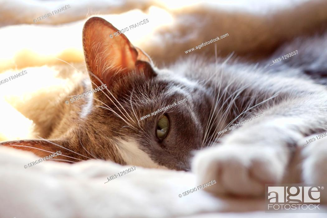 Stock Photo: Domestic cat.
