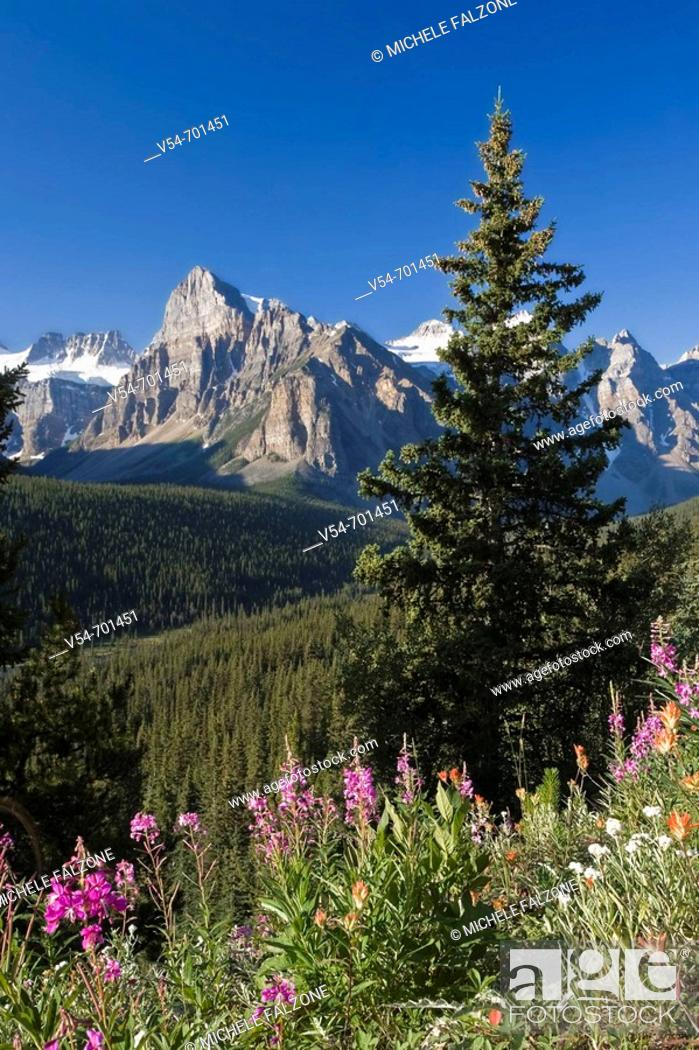 Stock Photo: Wildflowers and Valley of 10 Peaks (Wenkchemna Peaks) at sunrise, Banff National Park, Alberta, Canada.