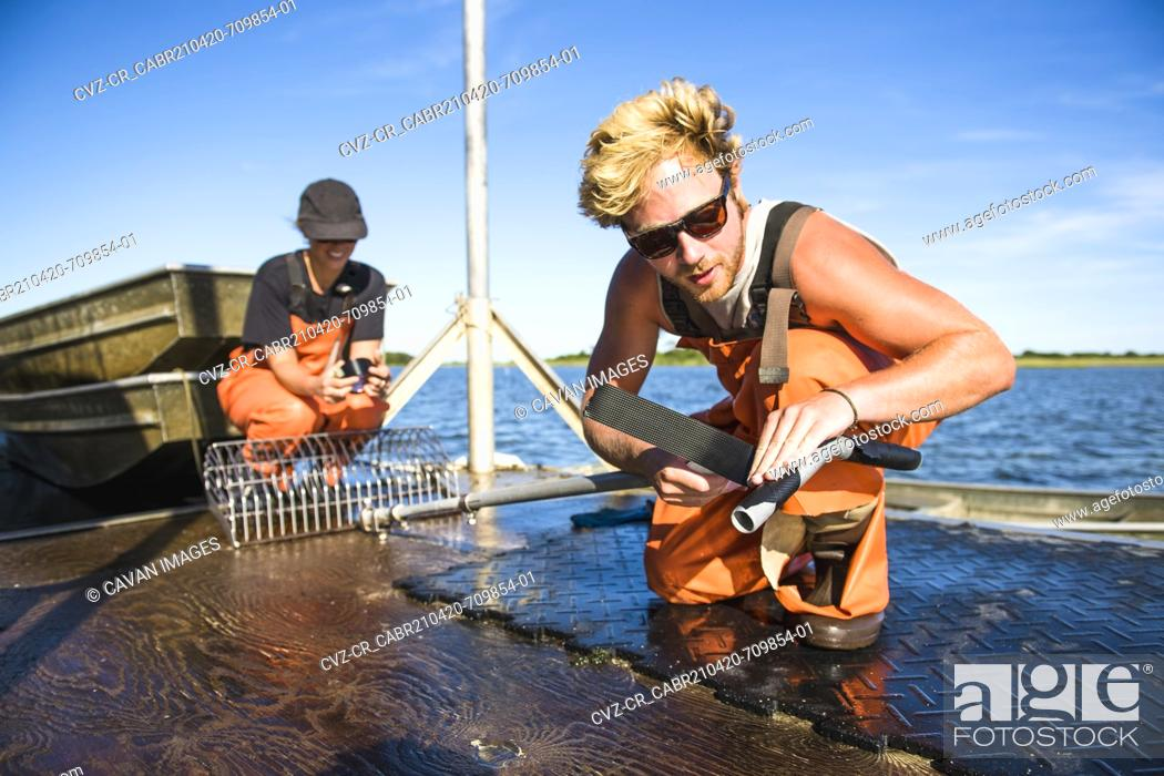 Stock Photo: Young man working on the water in aquaculture oyster farm maintenance.