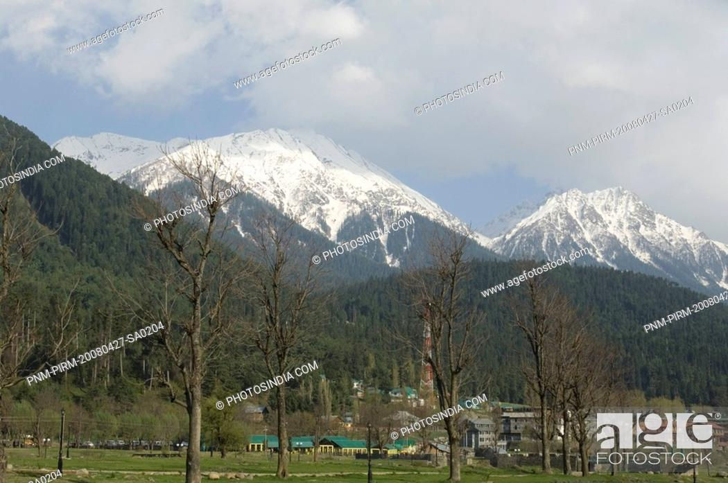 Stock Photo: Trees in front of a snowcapped mountain, Pahalgam, Anantnag District, Jammu And Kashmir, India.
