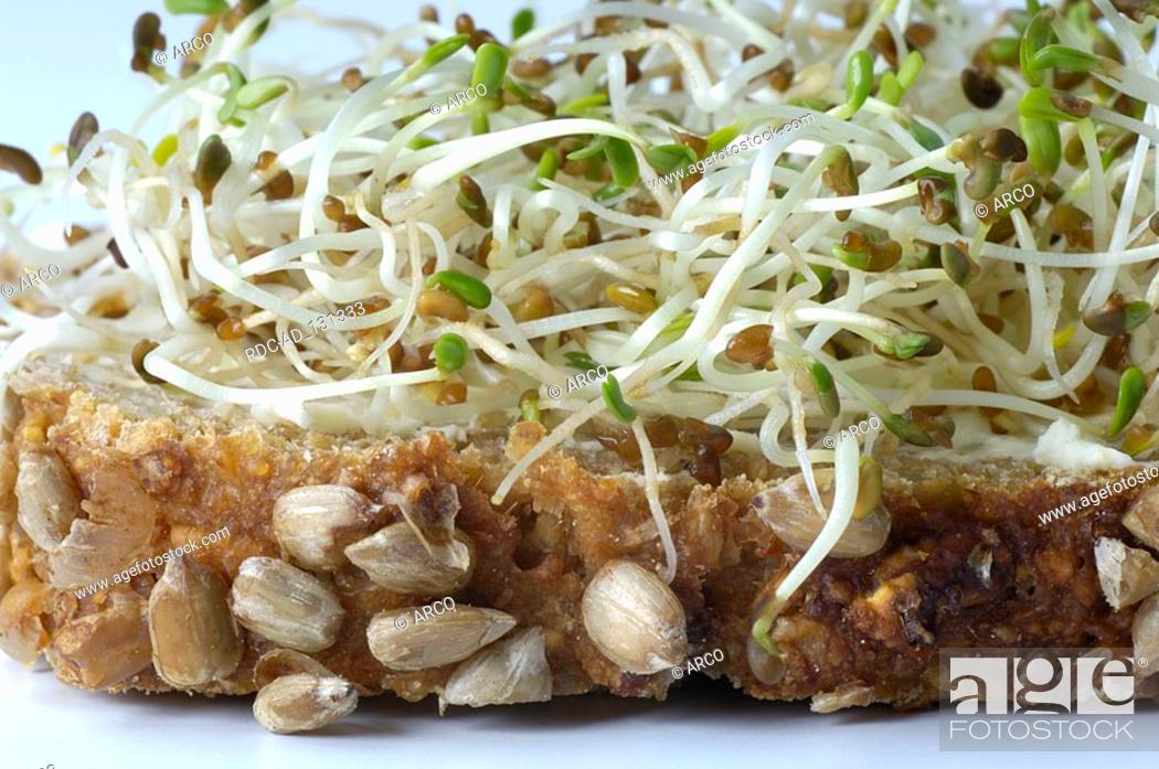 Bread with Alfalfa fresh sprouts Medicago sativa, Stock