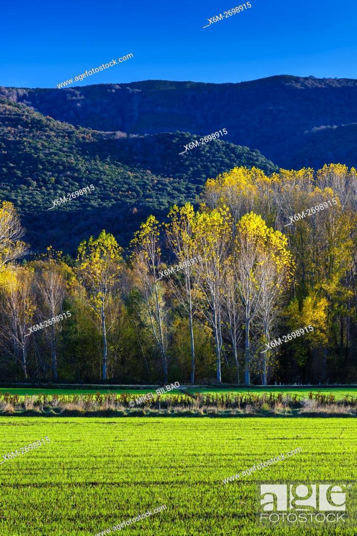 Imagen: meadow and poplar grove. Maeztu. Alava, Basque Country, Spain, Europe.