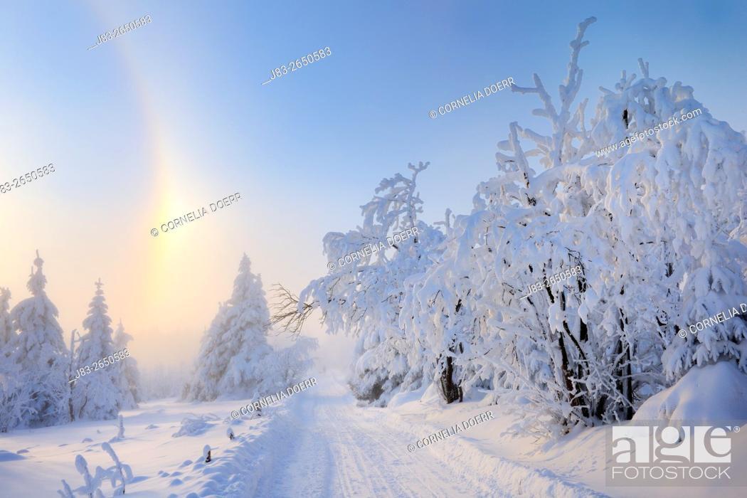 Stock Photo: Weg mit schneebedeckten Bäumen umgeben von einem Halo (optisches Naturereignis was durch Eiskristalle produziert wird), Fichtelberg, Erzgebirge, Sachsen.