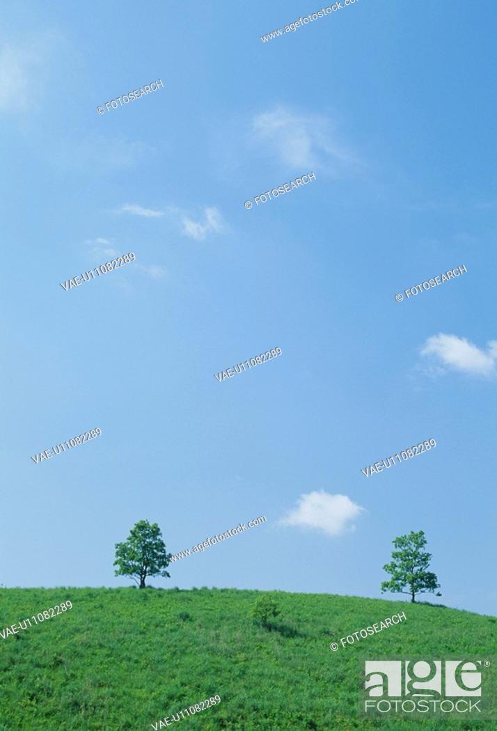 Stock Photo: The Tree And Blue Sky On A Plateau.