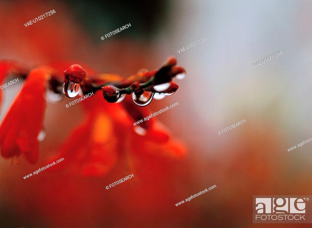 Stock Photo: waterdrop, flower, plants, plant, film.