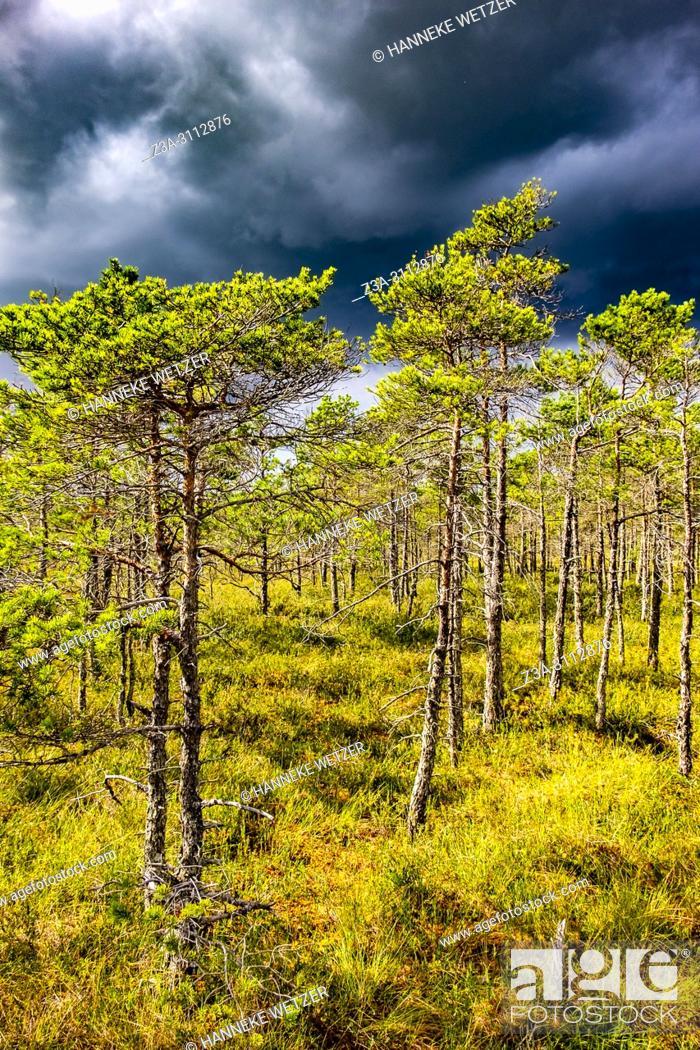 Photo de stock: Kemeri Bog Trail, Kemeri National Park, Latvia, Baltic States, Europe.