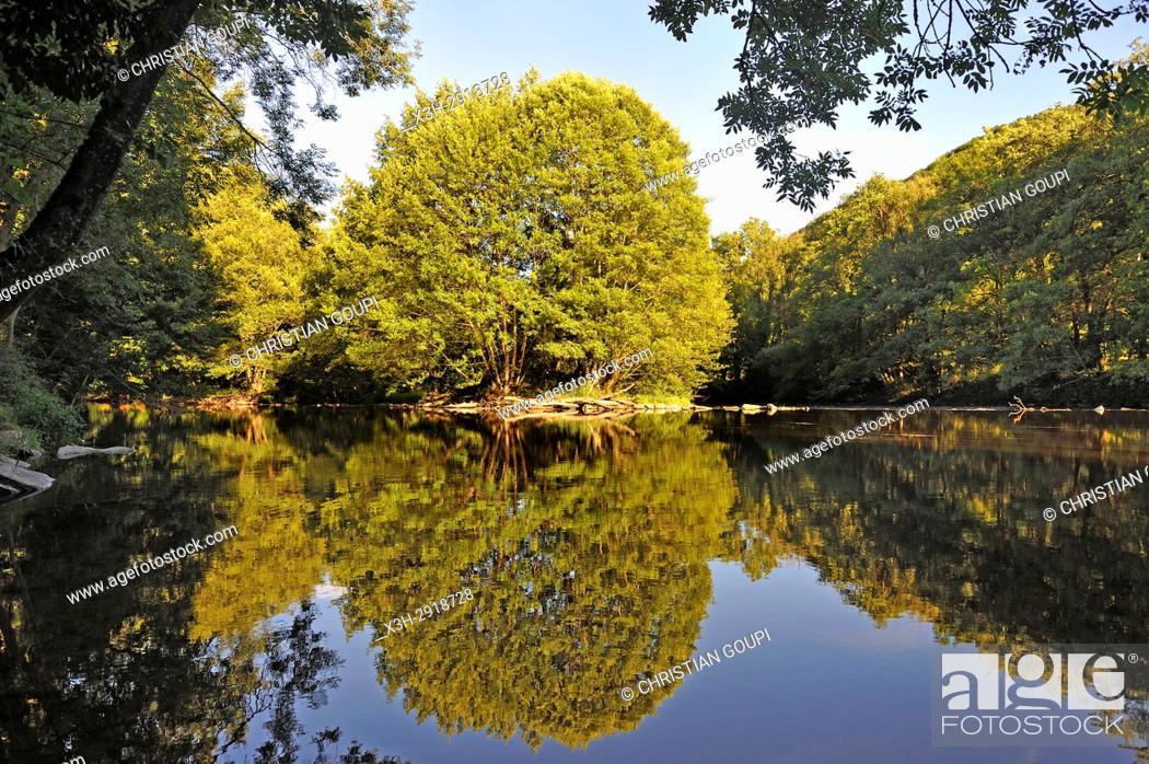 Stock Photo: Alder trees on the Sioule River banks, Puy-de-Dome department, Auvergne-Rhone-Alpes region, France, Europe.