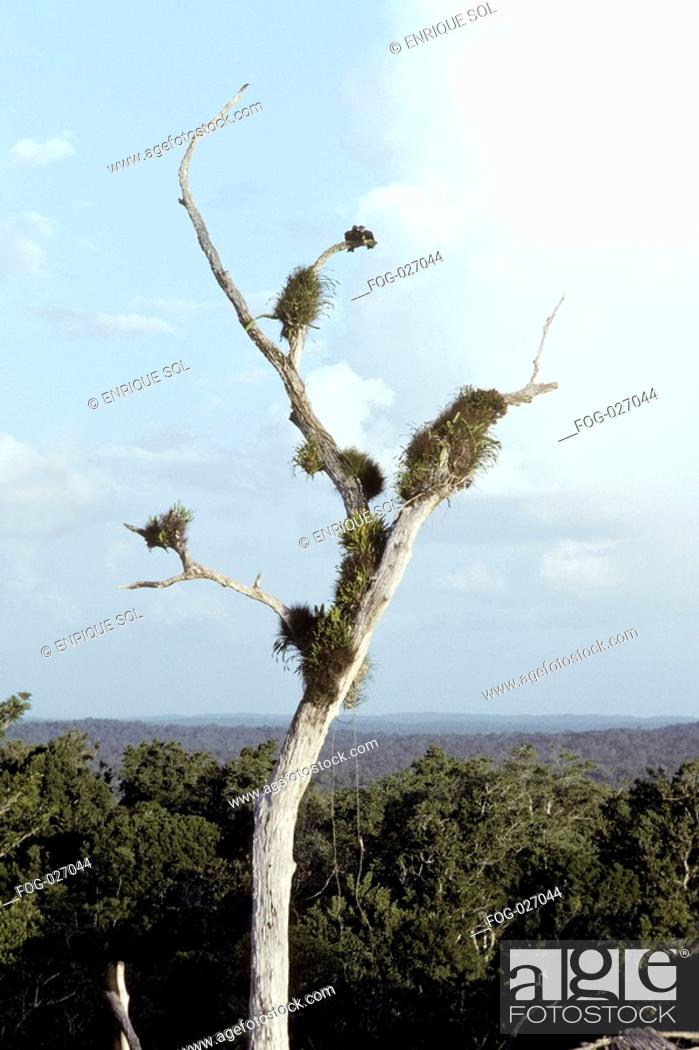 Stock Photo: Dead Tree With Birds' Nests.