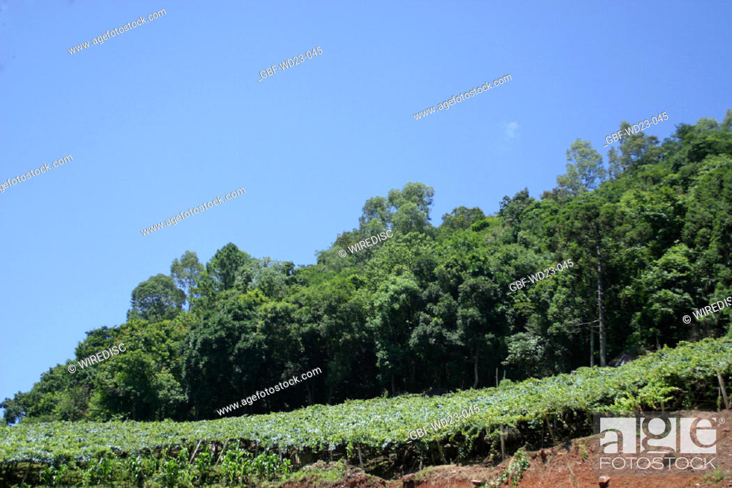Stock Photo: Farm plantations, agriculture, Brazil.