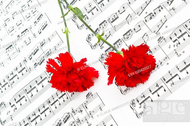 Stock Photo: Red carnation flower on musical notes page.