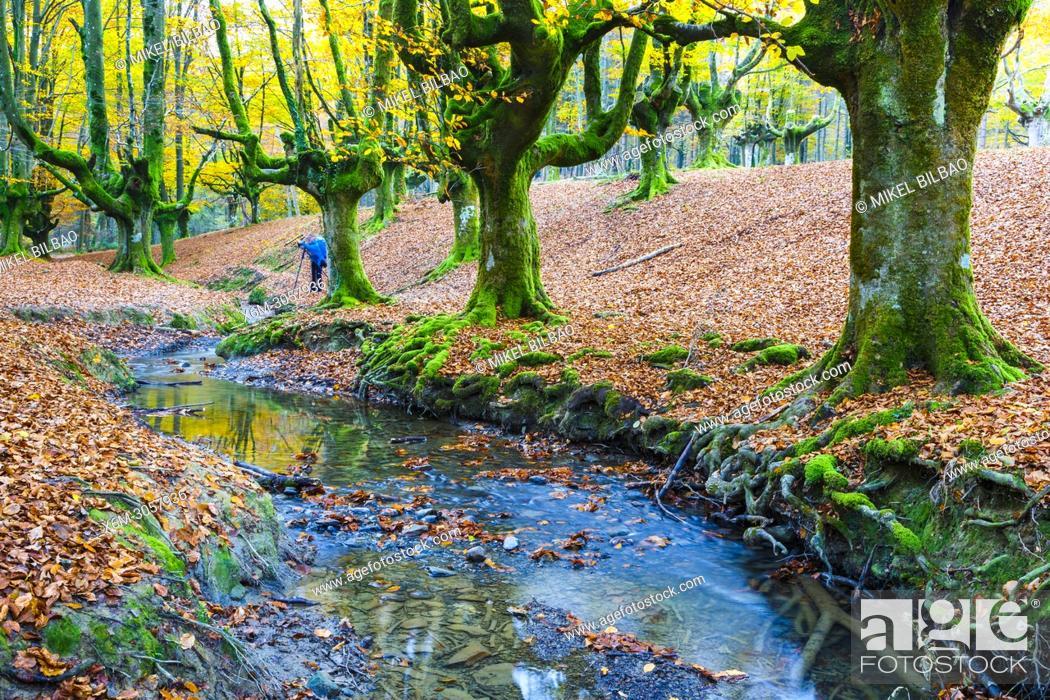 Imagen: Beechwood and rivulet. Otzarreta, Gorbeia Natural Park, Biscay, Spain, Europe.